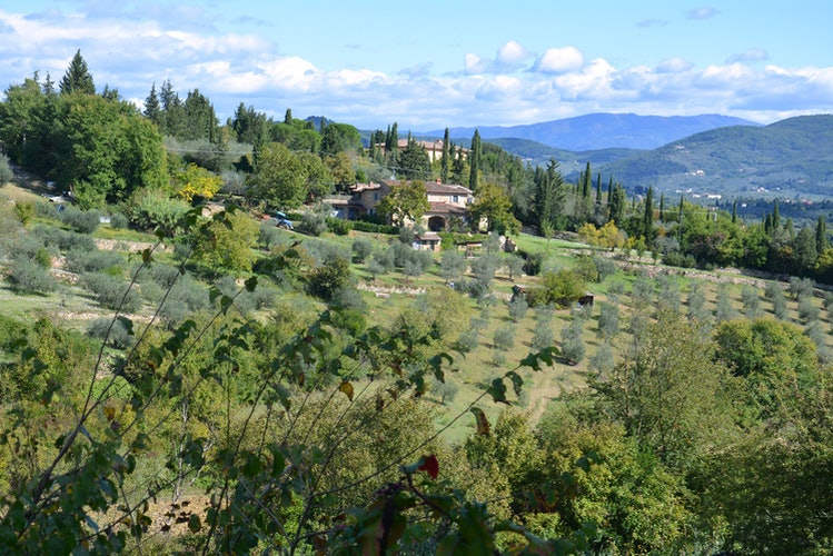 Agricola Poderino - Among the Olive Trees