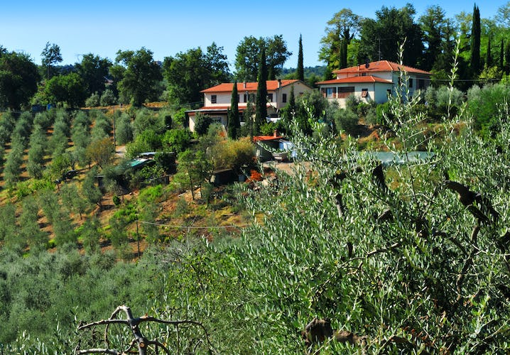 Agriturismo Cesani - Farmhouse & Olive Trees