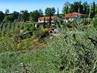 Agriturismo Cesani - Farmhouse & Olive Trees