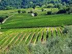 Vineyards of Cesani Agriturismo