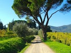 A walk in the relaxing countryside surrounding the estate