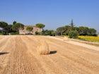 Agriturismo Il Molinello - Immersed in the typical landscape of the Crete Senesi