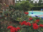 A view of the swimming pool with beautiful flowers