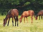 The horses of the farmhouse riding center