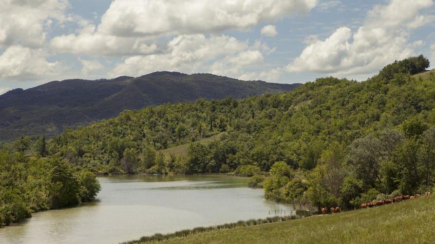 Agriturismo Piettorri - Il laghetto immerso nel paesaggio rurale di Siena