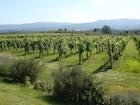 Vineyards San Jacopo