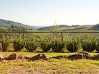 Enjoy the Tuscan countryside while being close to  Florence