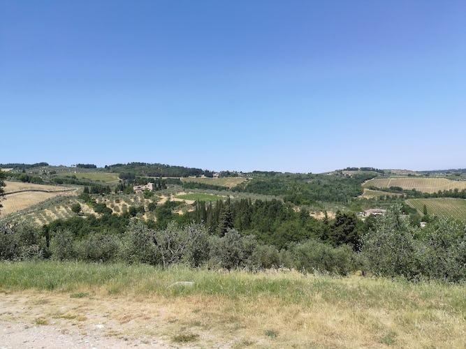 Agriturismo Vicolabate: produzione propria di olio extra vergine d'oliva, provane la genuina bontà