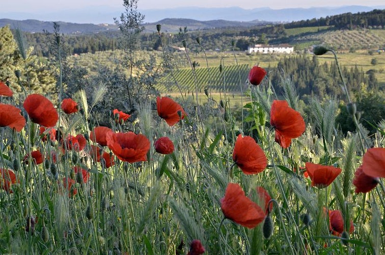 In the Chianti countryside, you will find silence, relax and charm