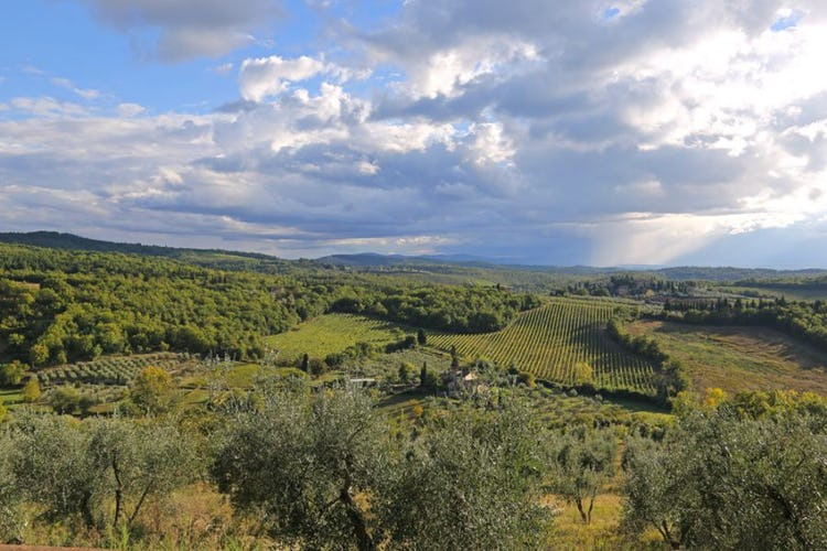 B&B del Giglio: The surrounding landscape
