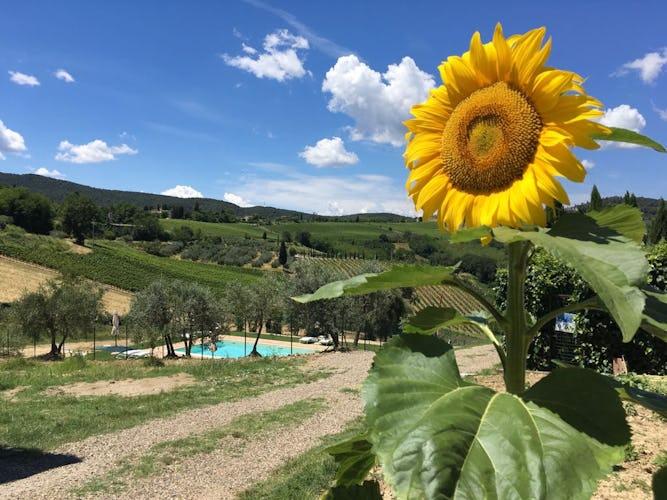 Agriturismo Casa dei Girasoli - Sunflowers in San Gimignano