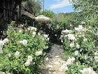 Respirare i profumi del Chianti: come un sogno ad occhi aperti