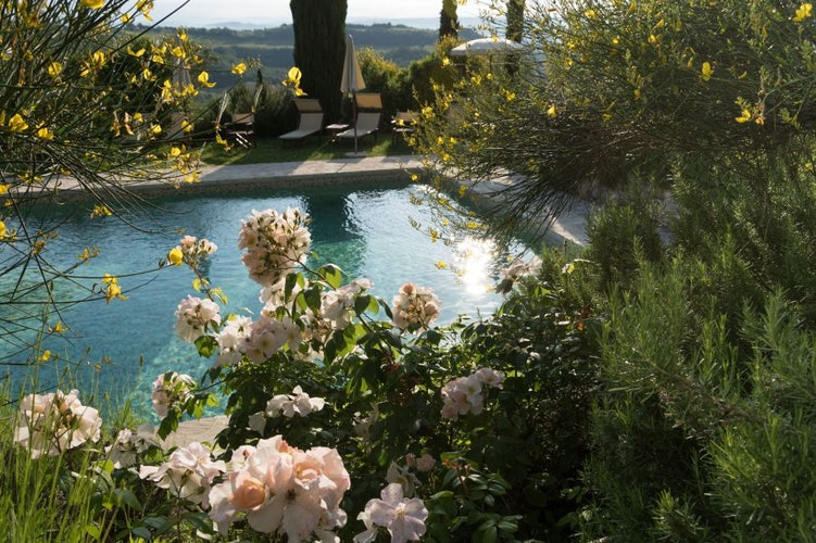 Il borgo è circondato dal profumo dei fiori, degli oliveti e vigneti