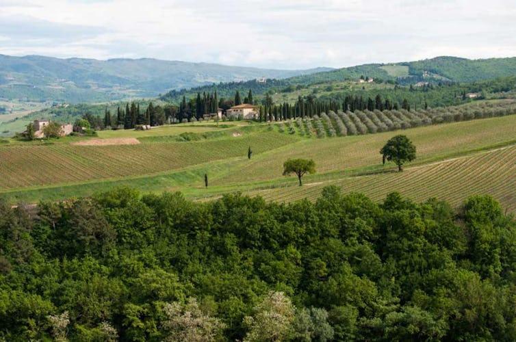 Classico panorama toscano con i caratteristici vigneti ed oliveti