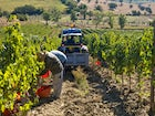 Poderi Firenze: people at work on vineyards