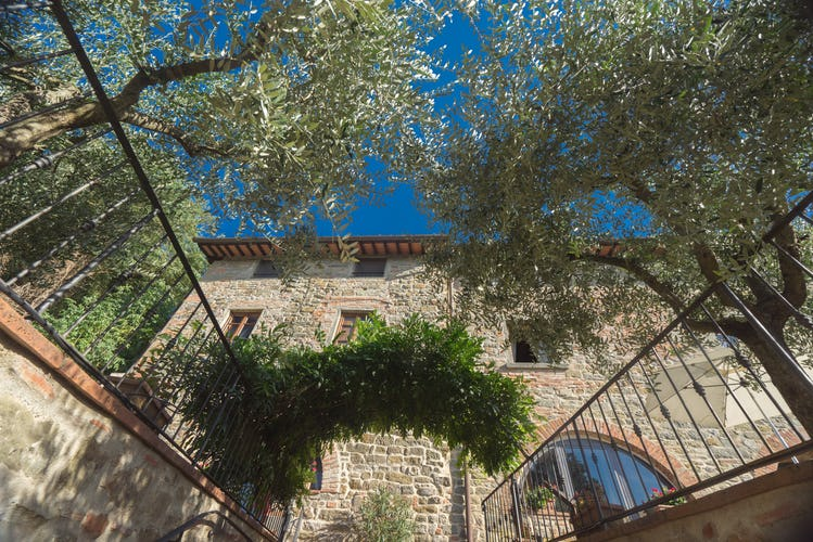 Residence Il Gavillaccio, peace among the olive trees