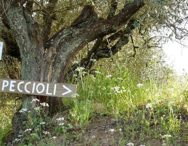 A due passi dal centro di Firenze, ma immersa nella natura di Toscana