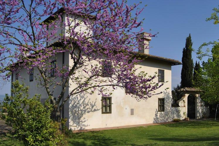 Villa la Medicea - Villa in Chianti